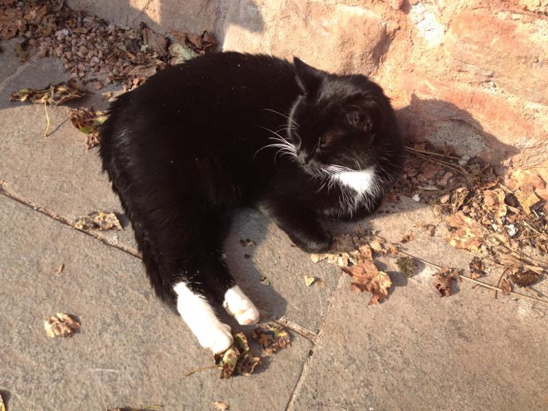Snuggly Rosslyn Chapel Kitty